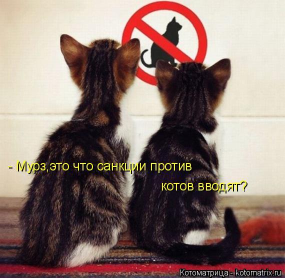 Котоматрица: - Мурз,это что санкции против  котов вводят?