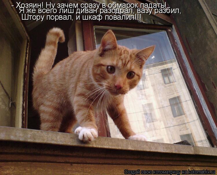 Котоматрица: - Хозяин! Ну зачем сразу в обмарок падать! Я же всего лиш диван разодрал, вазу разбил, Штору порвал, и шкаф повалил!!!