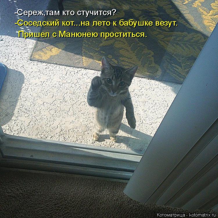 Котоматрица: -Сереж,там кто стучится? -Соседский кот...на лето к бабушке везут. Пришел с Манюнею проститься.