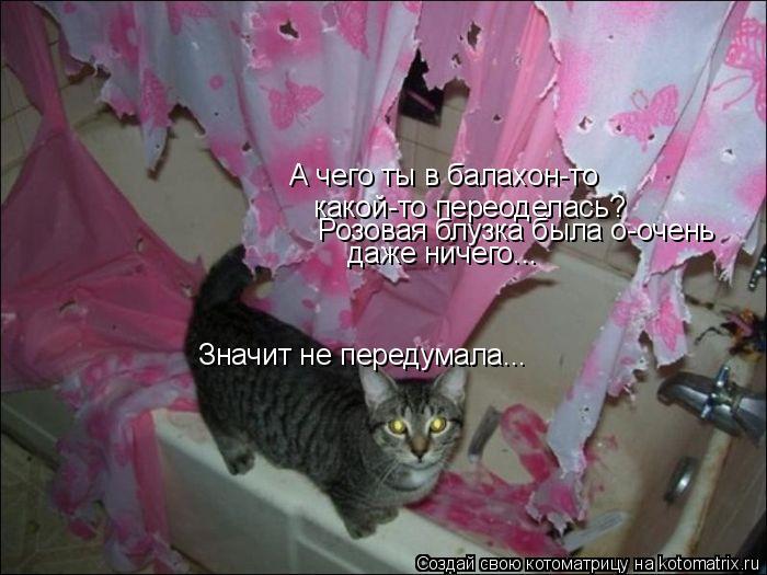 Котоматрица: А чего ты в балахон-то какой-то переоделась? Розовая блузка была о-очень даже ничего... Значит не передумала...