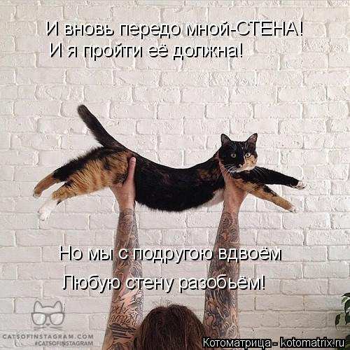 Котоматрица: И вновь передо мной-СТЕНА! И я пройти её должна! Но мы с подругою вдвоём Любую стену разобьём!