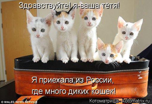 Котоматрица: Здравствуйте! я-ваша тётя! Я приехала из России, где много диких кошек!