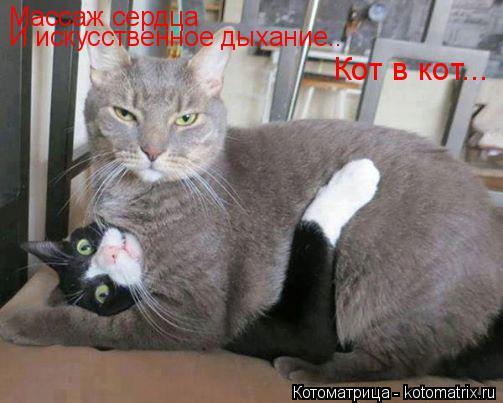 Котоматрица: Массаж сердца И искусственное дыхание.. Кот в кот...