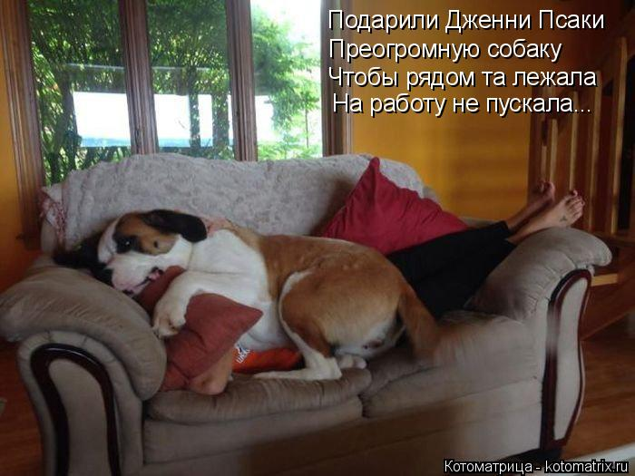 Котоматрица: Подарили Дженни Псаки Преогромную собаку Чтобы рядом та лежала На работу не пускала...