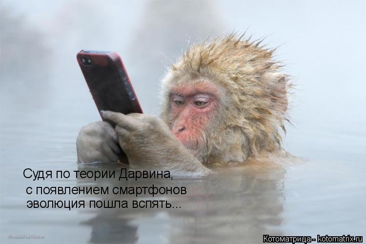 Котоматрица: Судя по теории Дарвина, с появлением смартфонов эволюция пошла вспять...