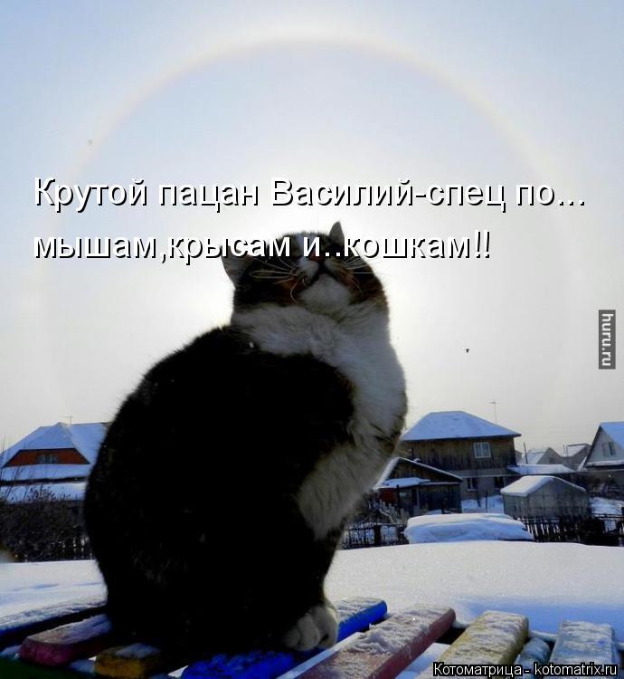Котоматрица: Крутой пацан Василий-спец по... мышам,крысам и..кошкам!!