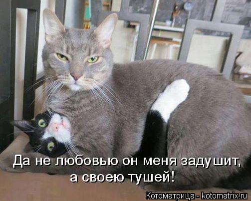 Котоматрица: Да не любовью он меня задушит, а своею тушей!