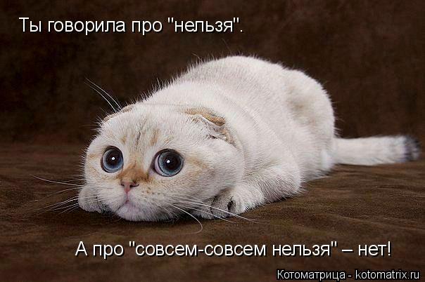 """Котоматрица: Ты говорила про """"нельзя"""". А про """"совсем-совсем нельзя"""" – нет!"""