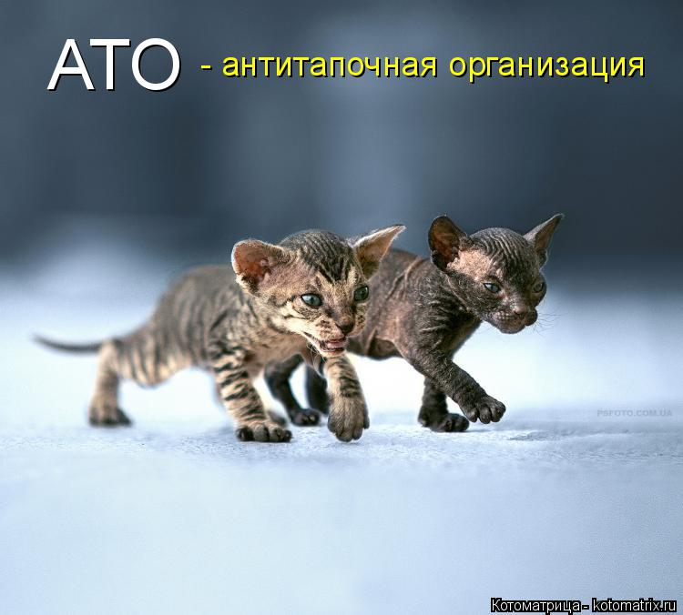 Котоматрица: АТО - антитапочная организация