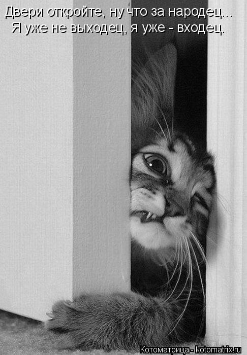 Котоматрица: Я уже не выходец, я уже - входец. Двери откройте, ну что за народец...