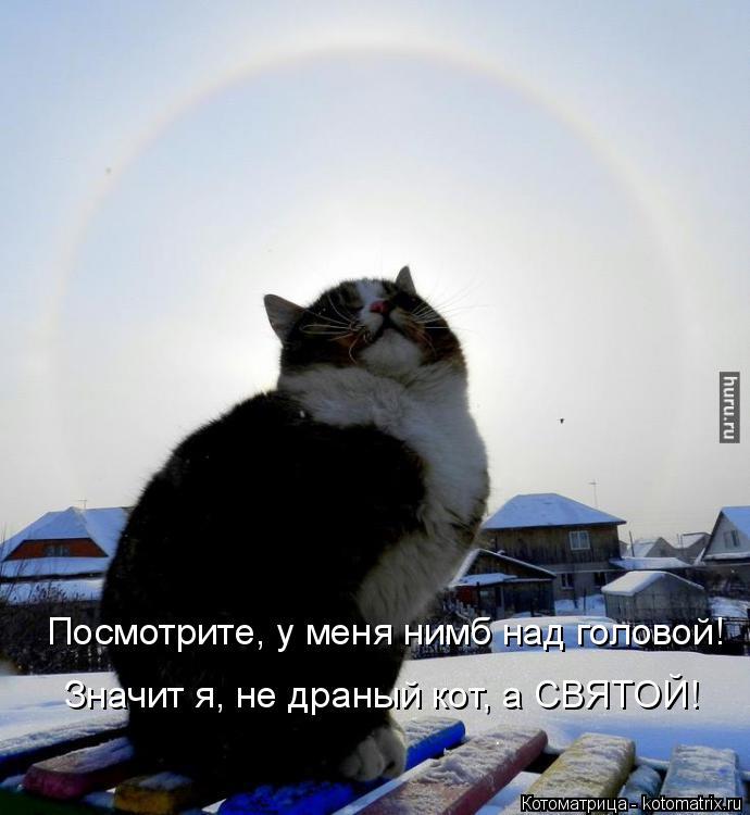 Котоматрица: Посмотрите, у меня нимб над головой! Значит я, не драный кот, а СВЯТОЙ!