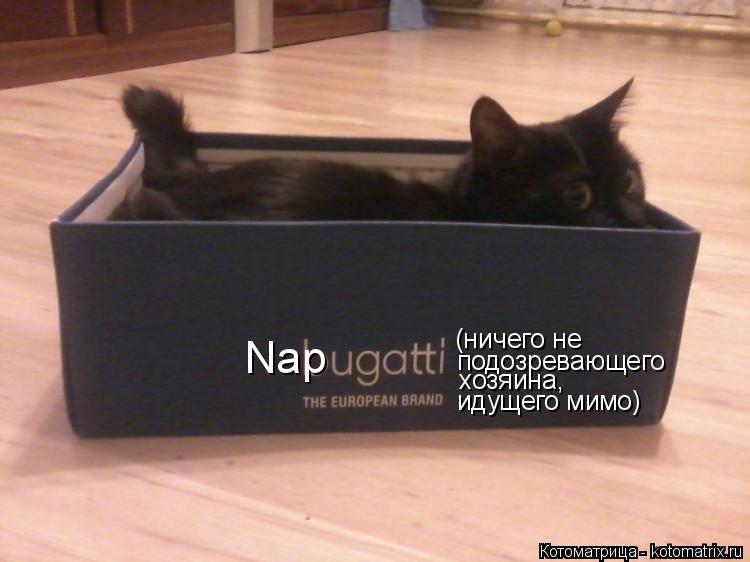 Котоматрица: Nap (ничего не подозревающего хозяина, идущего мимо)