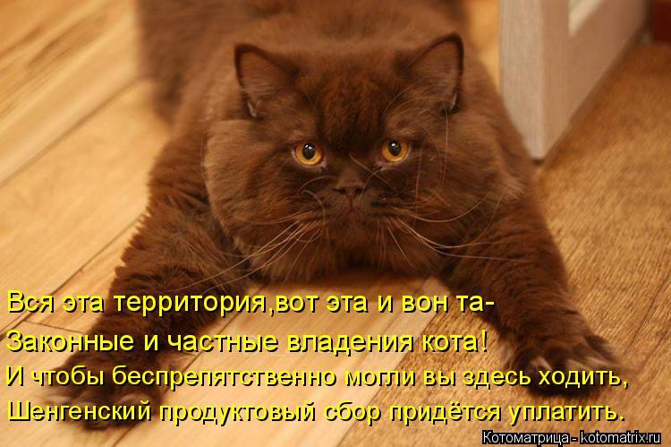 Котоматрица: Вся эта территория,вот эта и вон та- Законные и частные владения кота! И чтобы беспрепятственно могли вы здесь ходить, Шенгенский продуктов