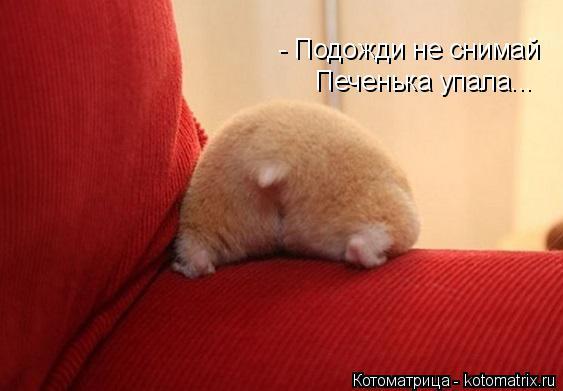Котоматрица: - Подожди не снимай Печенька упала...