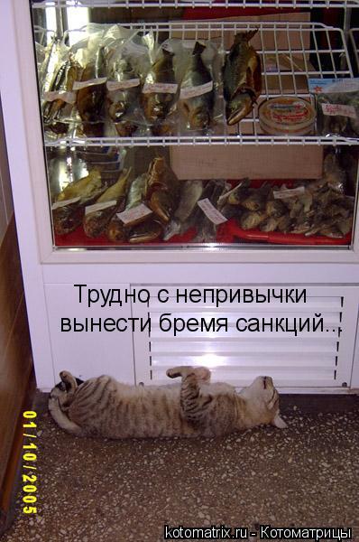 Котоматрица: Трудно с непривычки  вынести бремя санкций...