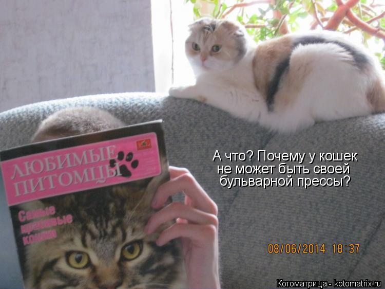Котоматрица: А что? Почему у кошек не может быть своей бульварной прессы?