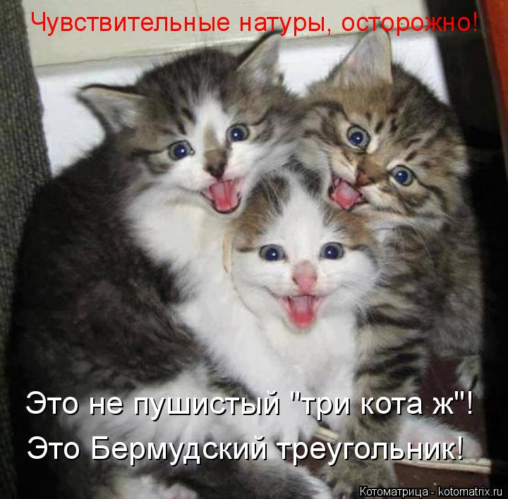 """Котоматрица: Чувствительные натуры, осторожно! Это не пушистый """"три кота ж""""! Это Бермудский треугольник!"""