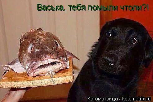 Котоматрица: Васька, тебя помыли чтоли?!