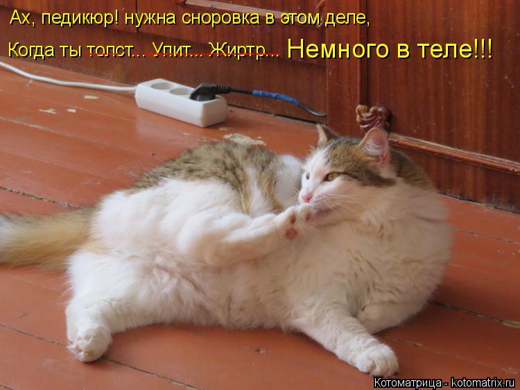 Котоматрица: Ах, педикюр! нужна сноровка в этом деле, Когда ты толст... Упит... Жиртр... ------  -        ----------------------       Немного в теле!!!