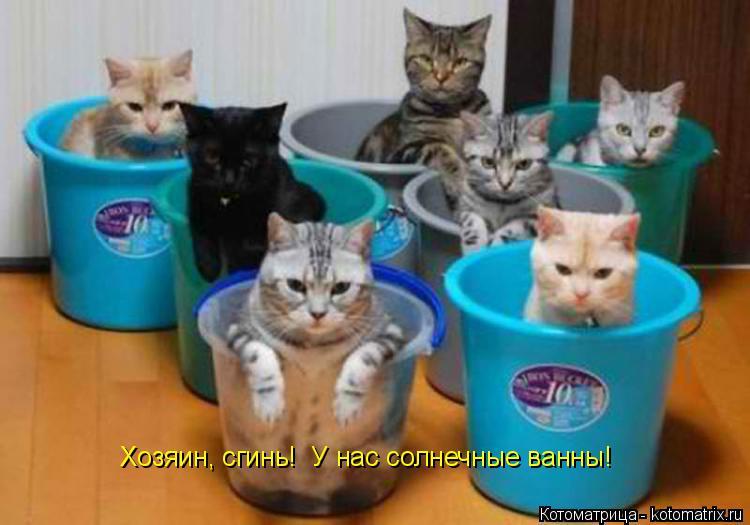 Котоматрица: Хозяин, сгинь!  У нас солнечные ванны!
