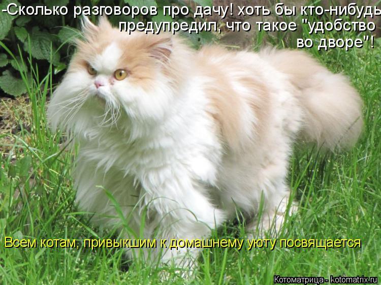 """Котоматрица: -Сколько разговоров про дачу! хоть бы кто-нибудь предупредил, что такое """"удобство во дворе""""! Всем котам, привыкшим к домашнему уюту посвящает"""