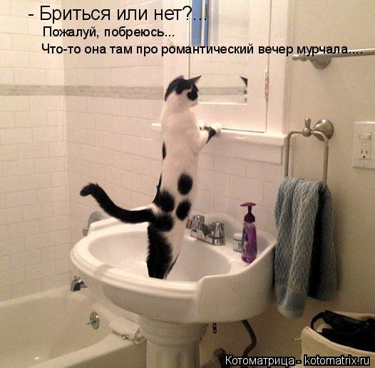 Котоматрица: - Бриться или нет?...  Пожалуй, побреюсь...  Что-то она там про романтический вечер мурчала....
