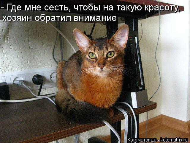 Котоматрица: - Где мне сесть, чтобы на такую красоту, хозяин обратил внимание