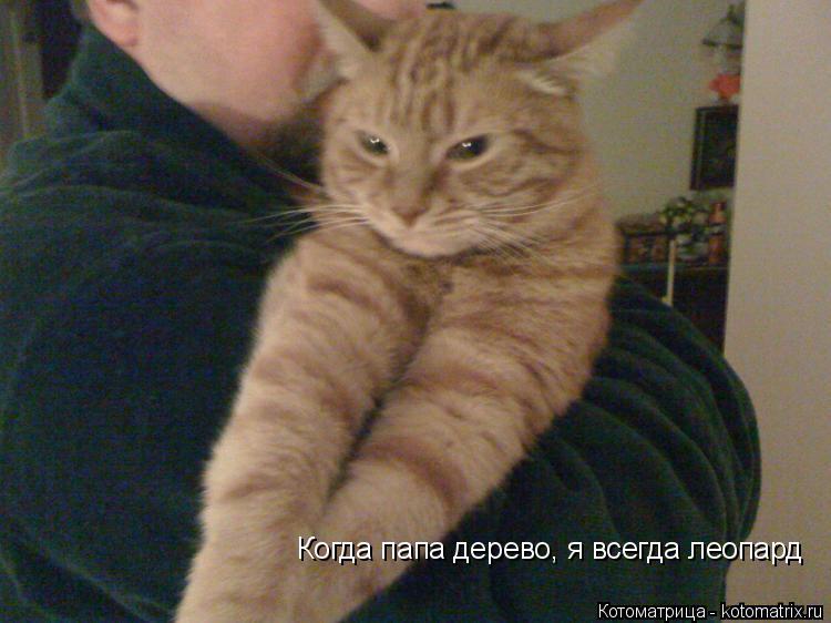 Котоматрица: Когда папа дерево, я всегда леопард