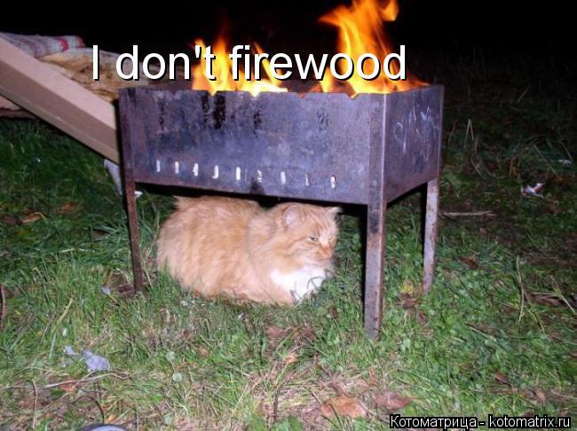 Котоматрица: I don't firewood