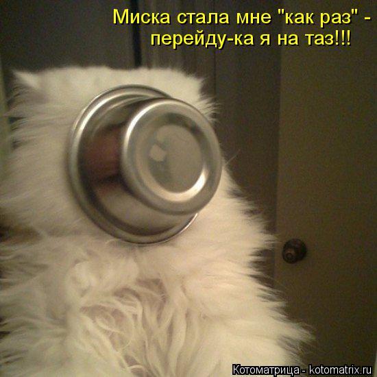 "Котоматрица: Миска стала мне ""как раз"" - перейду-ка я на таз!!!"