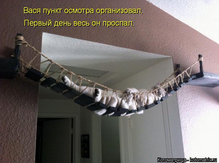 Котоматрица: Вася пункт осмотра организовал, Первый день весь он проспал.