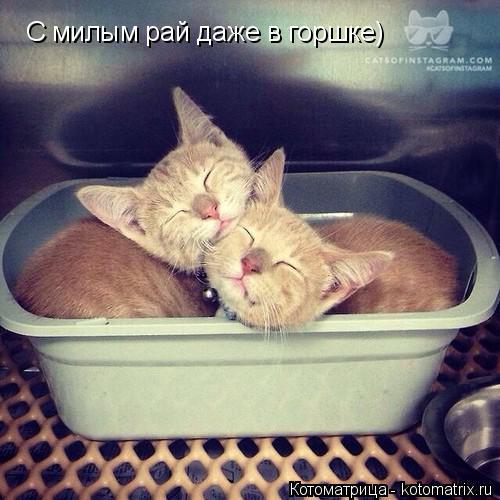Котоматрица: С милым рай даже в горшке)