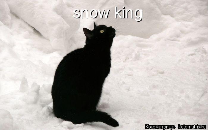 Котоматрица: snow king