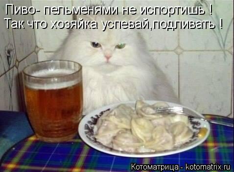 Котоматрица: Пиво- пельменями не испортишь ! Так что хозяйка успевай,подливать !