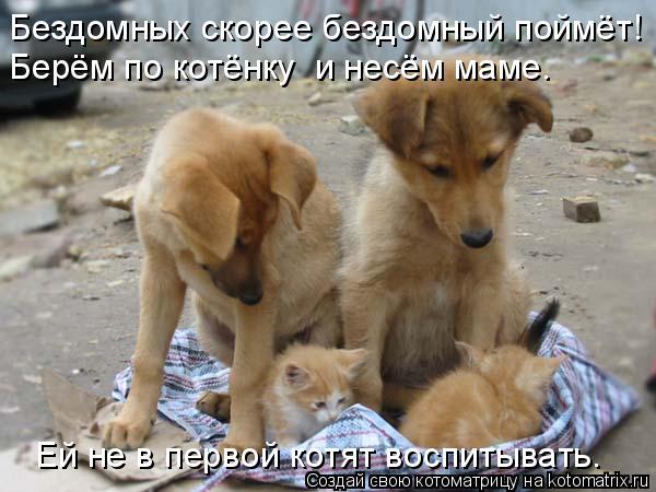 Котоматрица: Бездомных скорее бездомный поймёт! Берём по котёнку  и несём маме. Ей не в первой котят воспитывать.