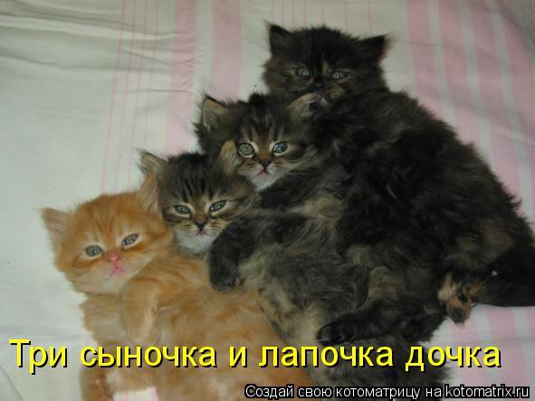 Котоматрица: Три сыночка и лапочка дочка