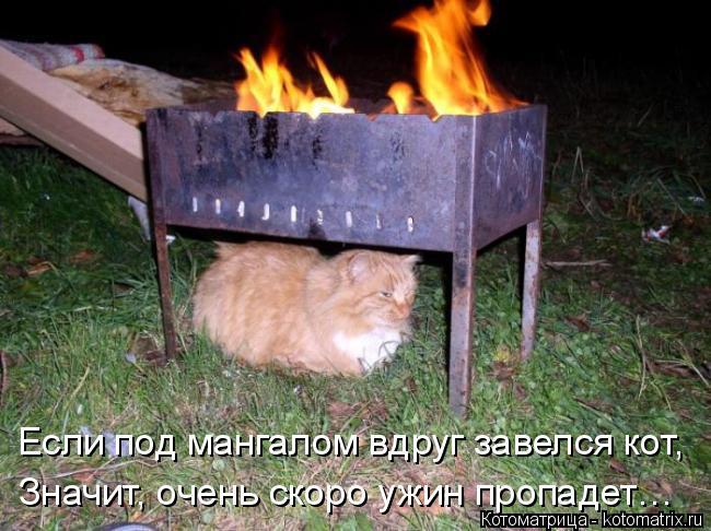 Котоматрица: Значит, очень скоро ужин пропадет… Если под мангалом вдруг завелся кот,