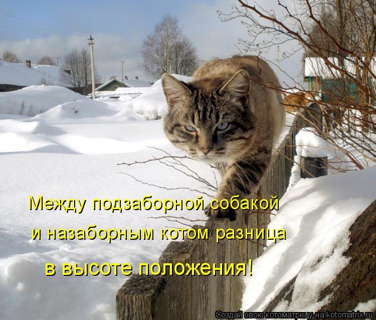 Котоматрица: Между подзаборной собакой и назаборным котом разница в высоте положения!