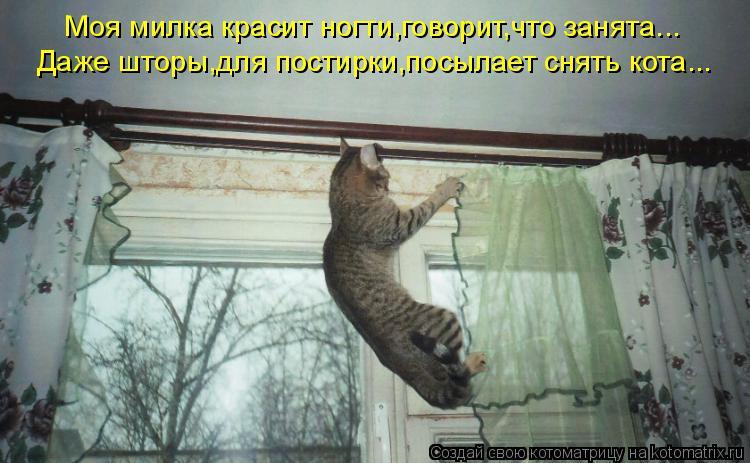 Котоматрица: Моя милка красит ногти,говорит,что занята... Даже шторы,для постирки,посылает снять кота...