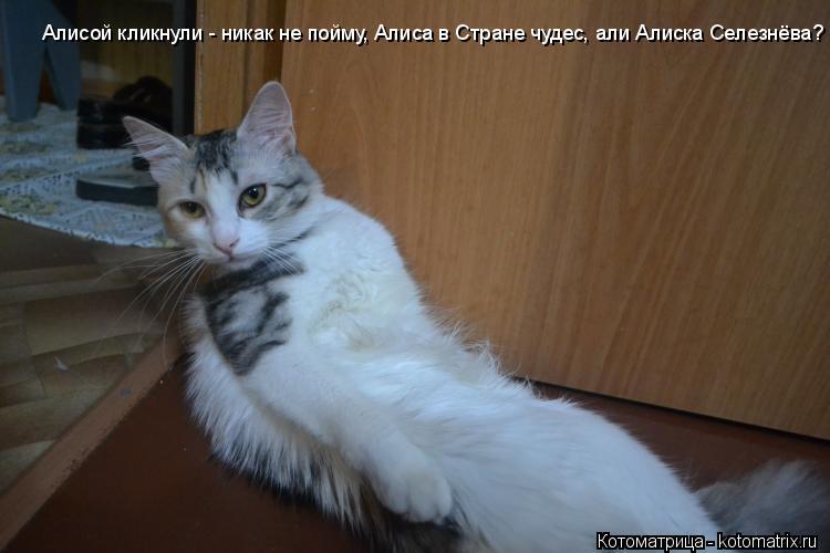 Котоматрица: Алисой кликнули - никак не пойму, Алиса в Стране чудес, али Алиска Селезнёва?