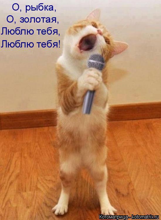 Котоматрица: Люблю тебя, Люблю тебя! О, золотая, О, рыбка,