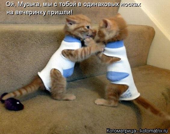 Котоматрица: Ой, Муська, мы с тобой в одинаковых носках  на вечеринку пришли!
