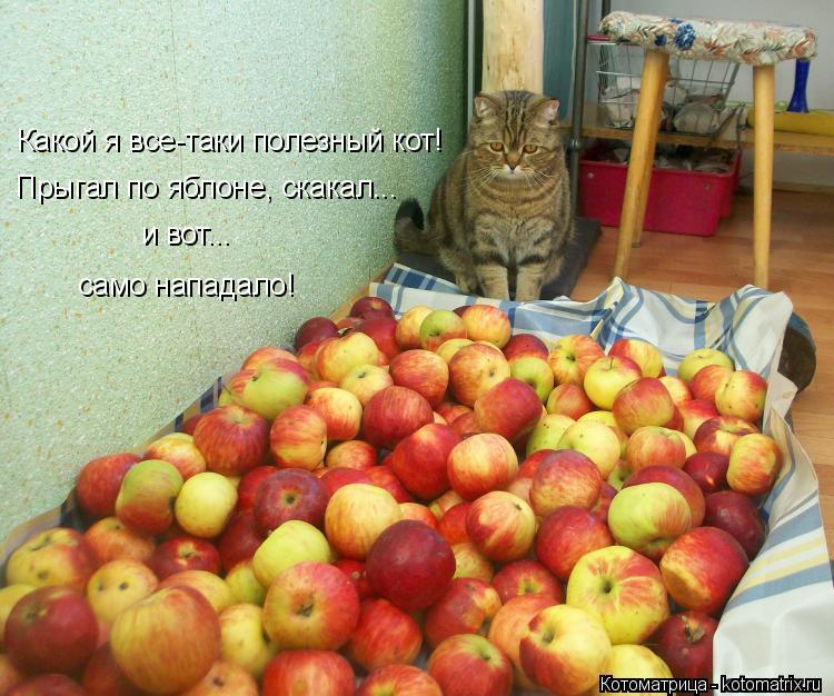Котоматрица: Какой я все-таки полезный кот! Прыгал по яблоне, скакал... и вот... само нападало!