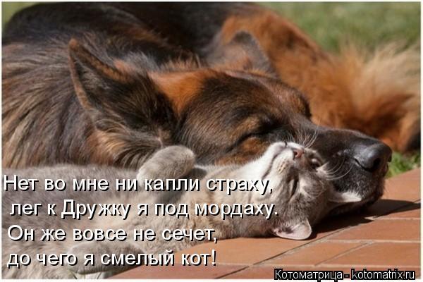 Котоматрица: лег к Дружку я под мордаху. Нет во мне ни капли страху, Он же вовсе не сечет,  до чего я смелый кот!