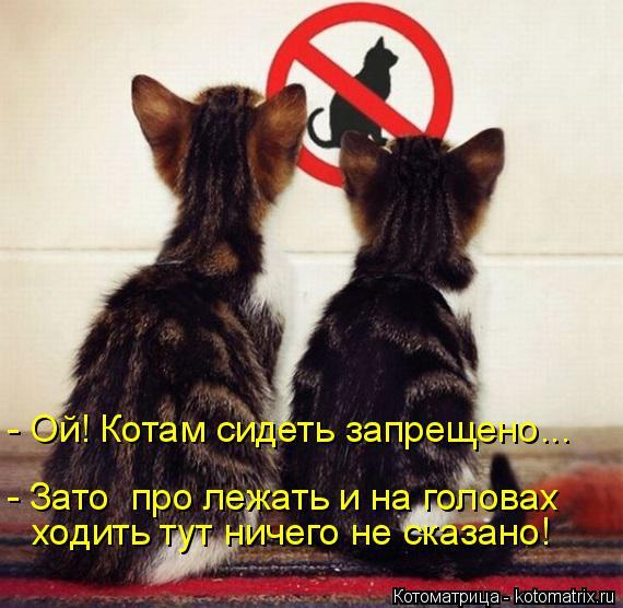Котоматрица: - Ой! Котам сидеть запрещено... - Зато  про лежать и на головах ходить тут ничего не сказано!