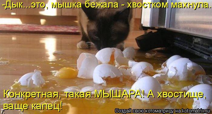 http://kotomatrix.ru/images/lolz/2014/08/18/kotomatritsa_w.jpg