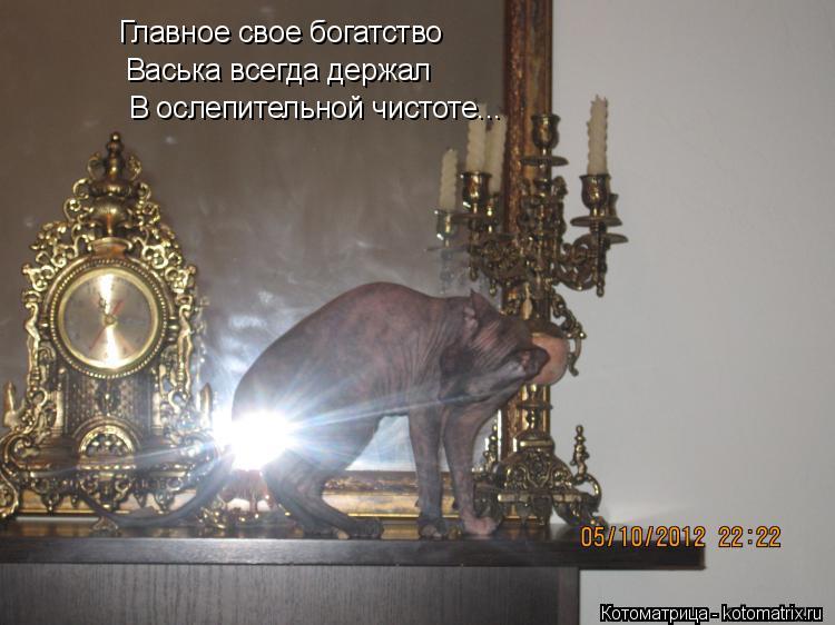 Котоматрица: Главное свое богатство  Васька всегда держал В ослепительной чистоте...