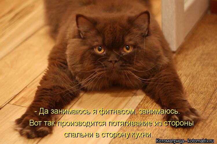 Котоматрица: - Да занимаюсь я фитнесом, занимаюсь.  Вот так производится потягивание из стороны  спальни в сторону кухни.