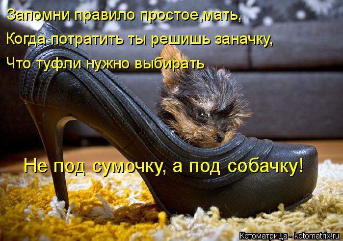 Котоматрица: Запомни правило простое,мать, Не под сумочку, а под собачку! Когда потратить ты решишь заначку, Что туфли нужно выбирать