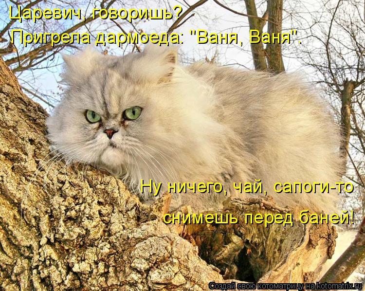 """Котоматрица: Царевич, говоришь?  Пригрела дармоеда: """"Ваня, Ваня"""". Ну ничего, чай, сапоги-то  снимешь перед баней!"""
